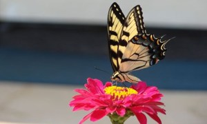 citazione-farfalla